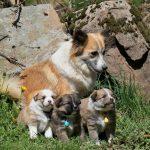 Gaya et ses 3 petits