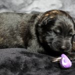 Femelle collier violet